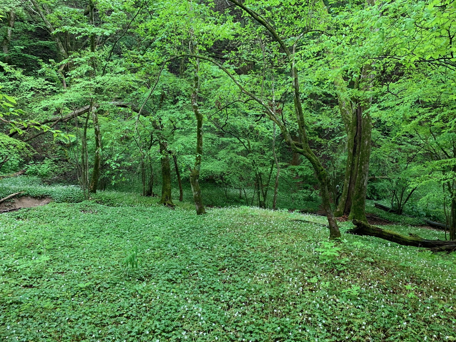森井塗装風景4